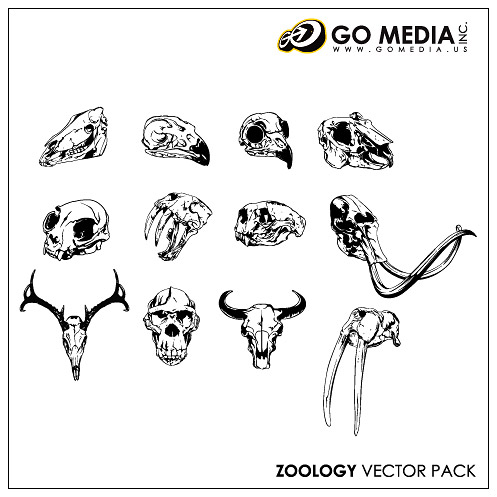 Go Media Vector Chupin material - animal skull