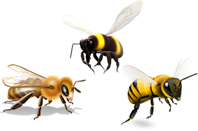 Bees PSD