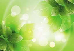 Spring green leafs background