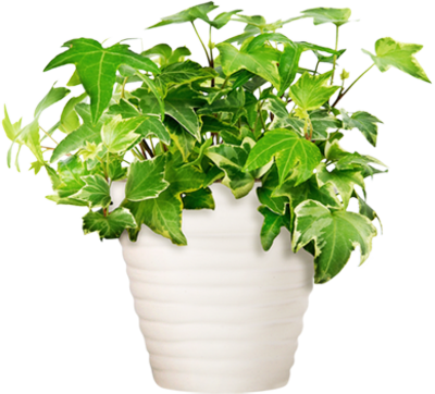 Potted Plant PSD