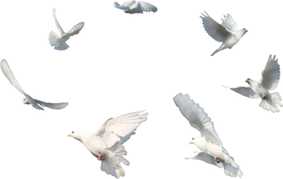 Various Doves PSD