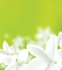 White Flowers on a Green Background (Free)