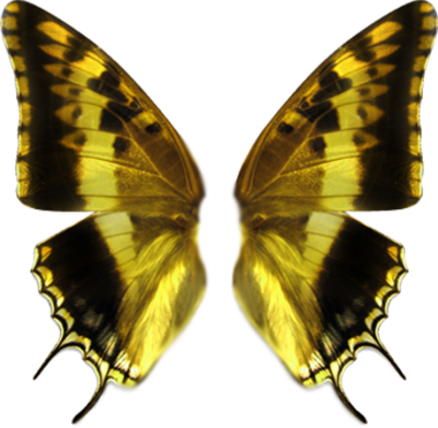 Butterfly Wings PSD