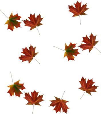 Falling Leaves PSD