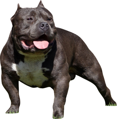 Bully Dog PSD