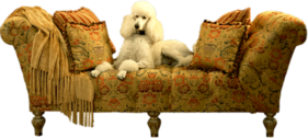 POODLE ON COUCH PSD