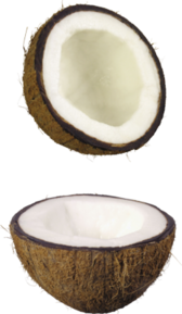 Coconut (high-res) PSD