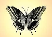 Retro Butterfly Drawing