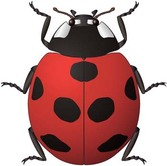 Red Bugs 6