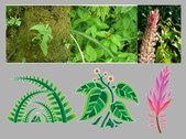 Traditional Chinese Medicine Plant Material 2