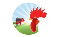 Free Vector Rooster