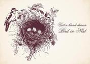 Free Hand Drawn Bird In Nest