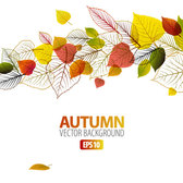 Autumn leaves background vector-6