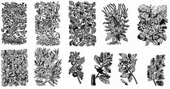11 Old Plant Engravings