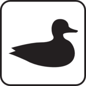 Waterfowl Water Fowl White