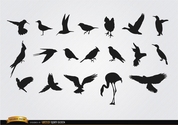 Species of birds silhouettes set