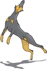 Doberman Vector 2