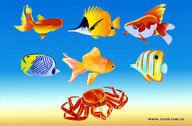 Fish And Crabs