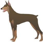 Doberman Vector 8