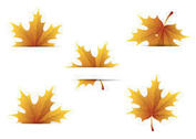 Free Maple Leaves Vectors