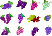 Fruit Of Grapes