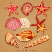 modern lovely seashell icon