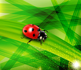Leaves and Lady Bug Background