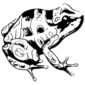 POISONOUS FROG FREE VECTOR.eps