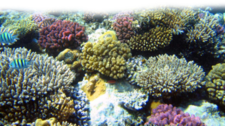 coral PSD