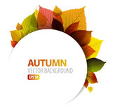 Autumn leaves background vector-5
