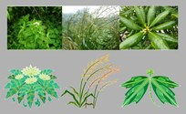 Traditional Chinese Medicine Plant Material A