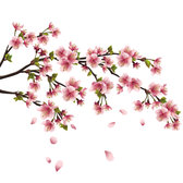 Peach flower background vector-3