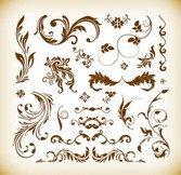 Various Floral Vector Illustration Set