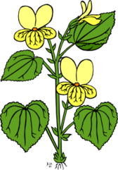 floral plant with green leaves