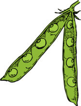 pea pod - color