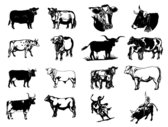 Vector picture black and white paintings cattle Series II