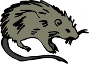 Mouse Rat Rodent
