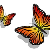 Pair of Colorful Butterflies