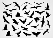 Black Flying Bird Silhouettes