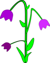 purple bell flowers