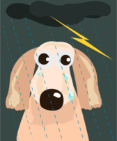 sad dog in the rain