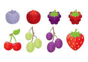 Berry and Fruit Vectors
