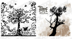 Patterns And Silhouettes Of Trees