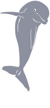 Dolphin Jumping, Front