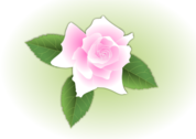 Pink rose - updated and fixed