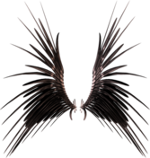 A set of 3D Wings High Res PSD