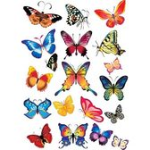Butterfly Collection, Free