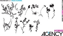 Some pretty, dead, dry flowers silhouettes