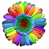 Rainbow Flower PSD