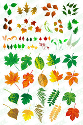 A variety of leaves